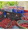 Cherry Preserve